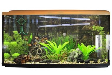 Cleaning Fish Tank With Vinegar