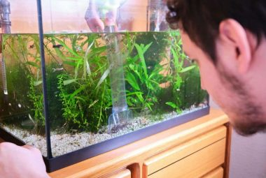 Best Fish Tank Cleaning Service